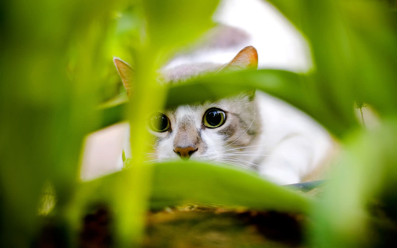 The wild nature of cats: the truth is in their DNA