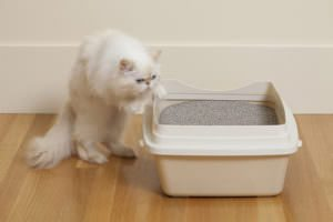 Why does a cat dirty out of the litter box?